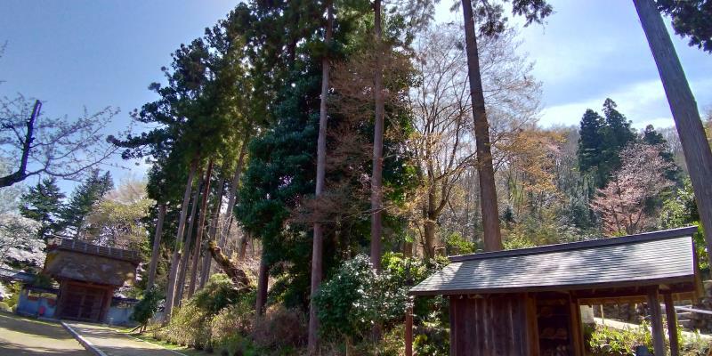 広徳寺の背の高い木々