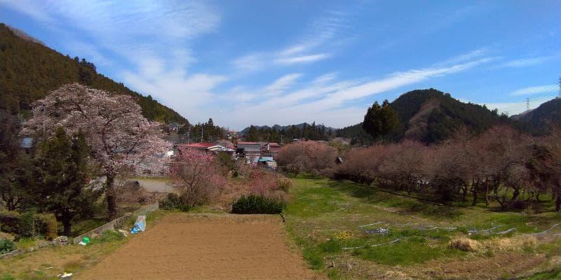 畑と青空の広がるのどかな景色