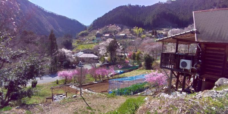 乙津花の里ののどかな花の景色