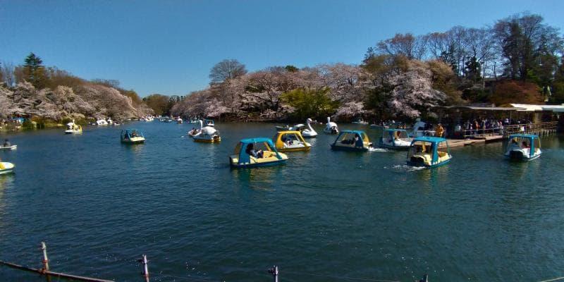 池に浮かぶ無数のボート