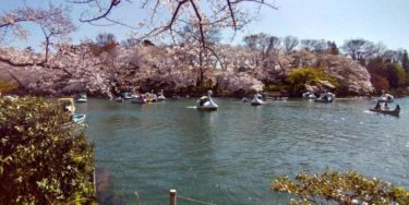 桜をバックに池を泳ぐボート