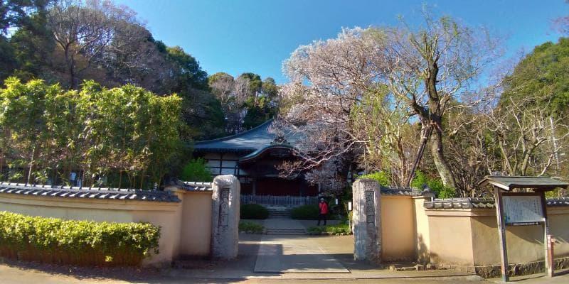国分寺万葉植物園の様子。桜は少ない。