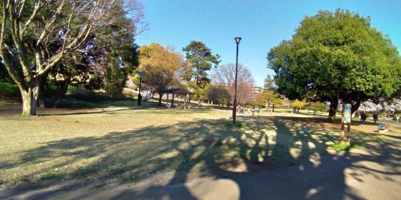 都立武蔵国分寺公園の芝生