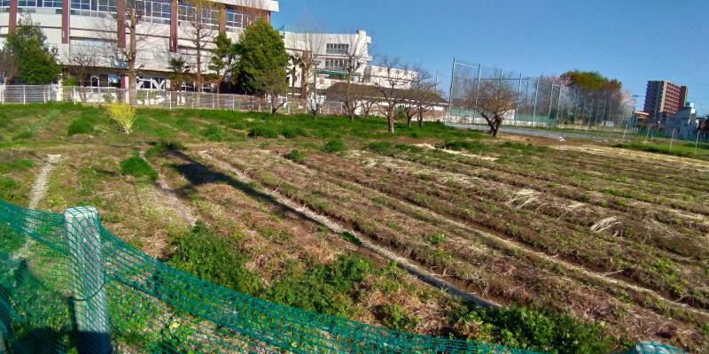 少し広い国分寺の畑
