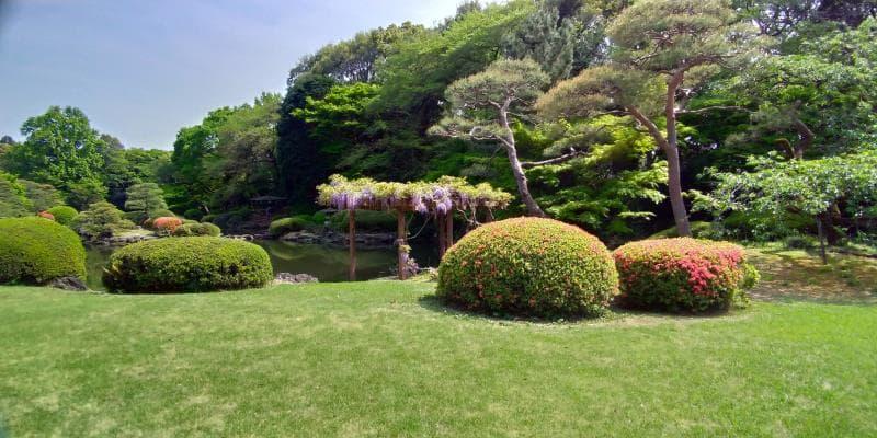 新宿御苑に咲く藤の花