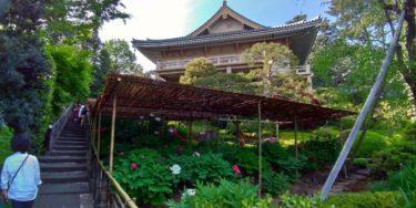薬王院の階段と牡丹