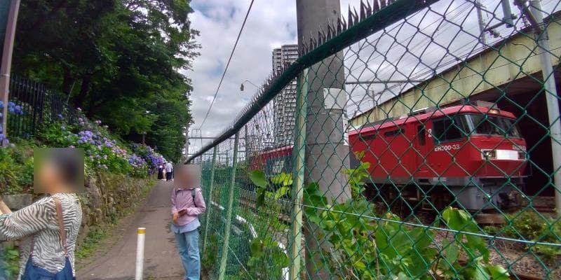 アジサイの小道の横を通過する赤いディーゼルカー
