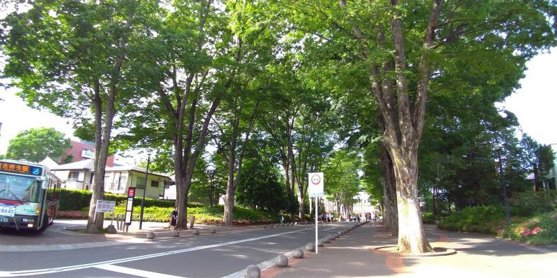 成城学園の入口からはじまるケヤキ並木