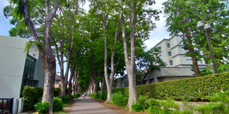 細い路地につづく並木。右側は大学校舎