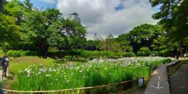 菖蒲田の向こうに木々が広がり、その奥にジェットコースターが見える