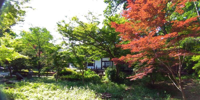赤い葉と新緑のコントラスト