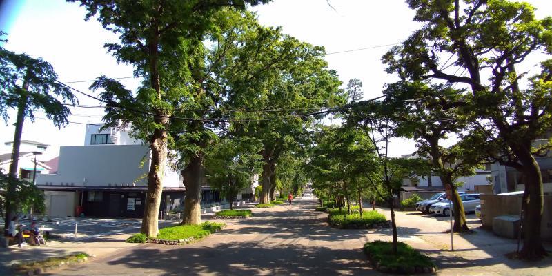高い木々が並ぶ参道