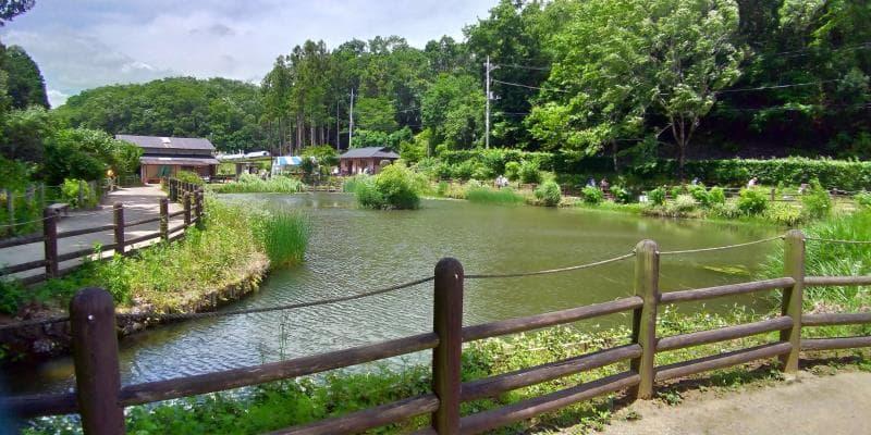 菖蒲園前の池