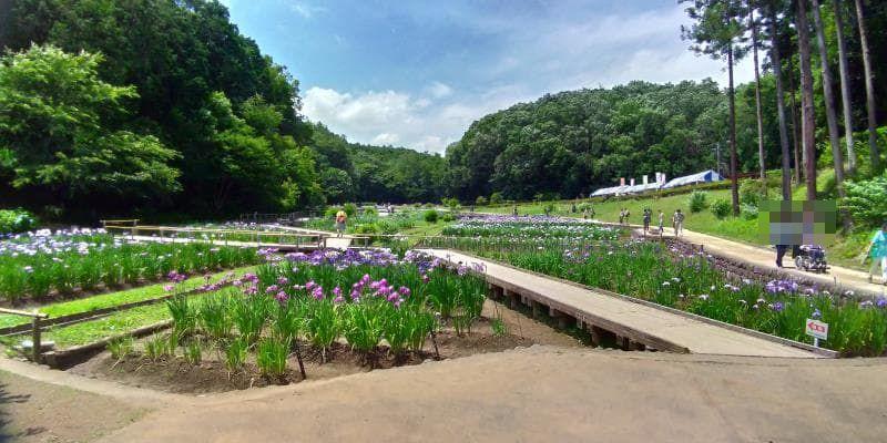 こんもりと木々に囲まれた菖蒲園