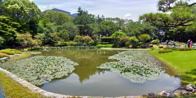 ハスの浮かぶ池