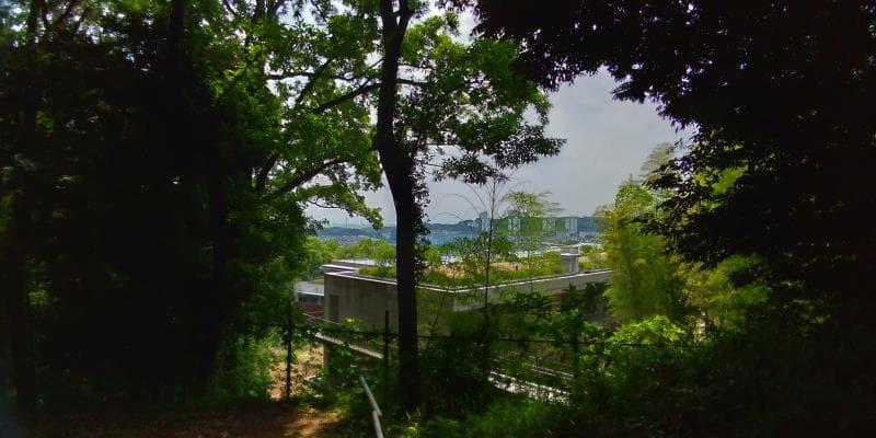 木々の間から見える街並み