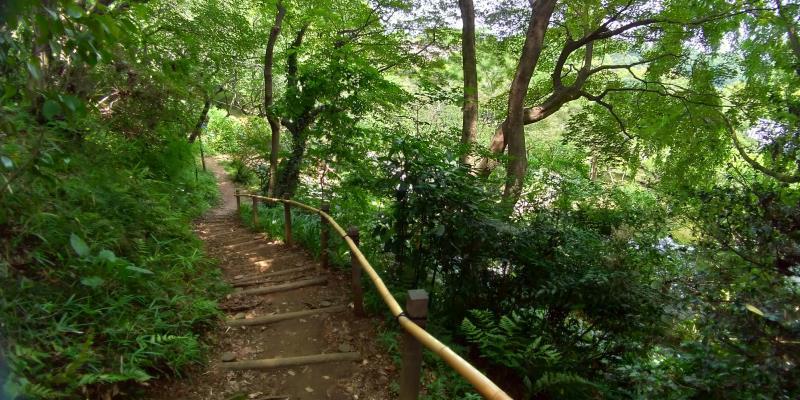 木々に囲まれた土の階段