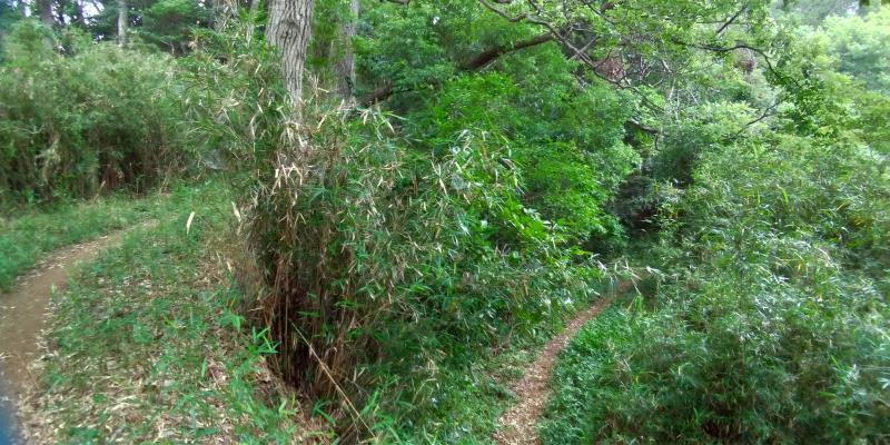 雑木林の分かれ道