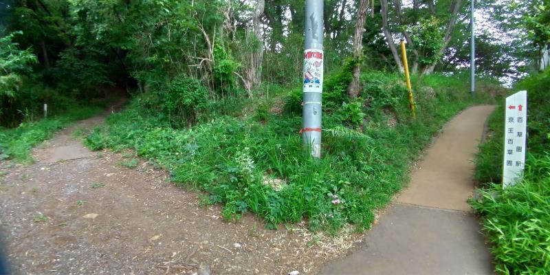 雑木林入口の分かれ道