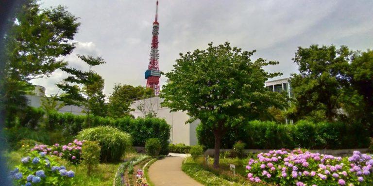 東京タワーと芝公園のアジサイ