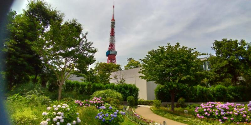 青やピンクのアジサイが咲く奥には東京タワーがそびえる