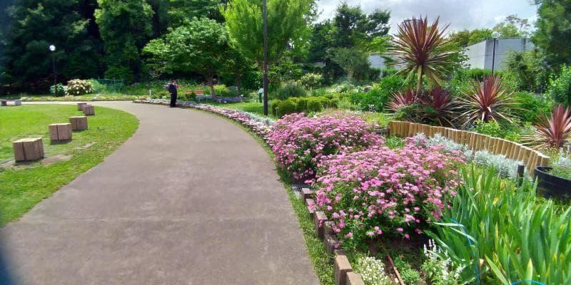 ピンクの花が咲く花壇