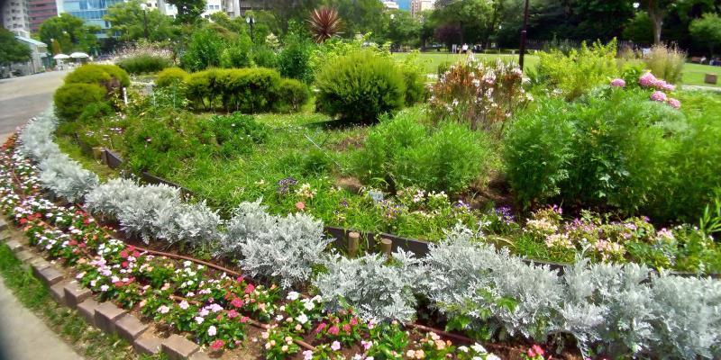 ハーブのような草木の植えられた芝公園のガーデン