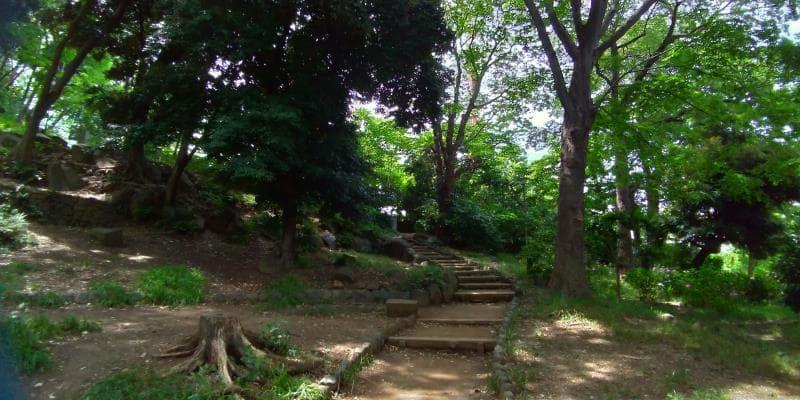 林に整備されたのぼり階段