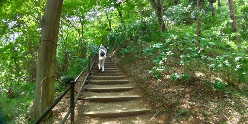 新緑に包まれた階段を上る女性