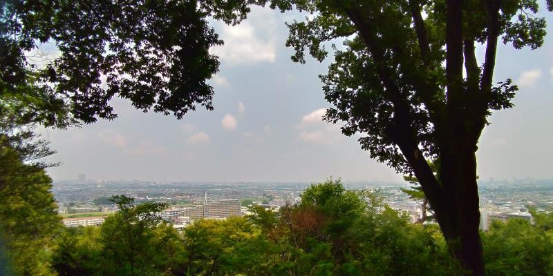 木々の間から見た街並み。建物が小さく見える