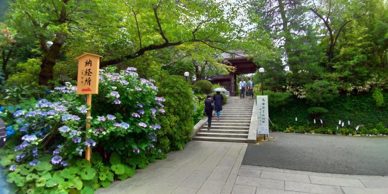 青いアジサイと新緑に彩られた山門に続く階段