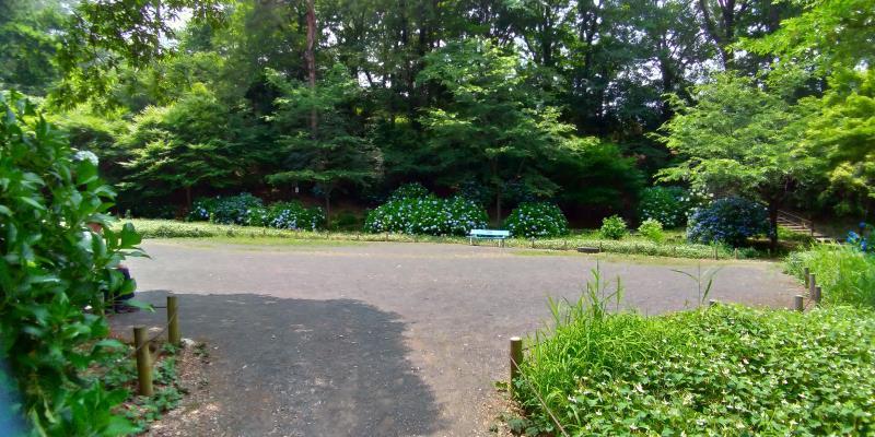 新緑の木々に囲まれた広場