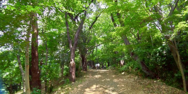 眩しい緑色の木々の下を歩く