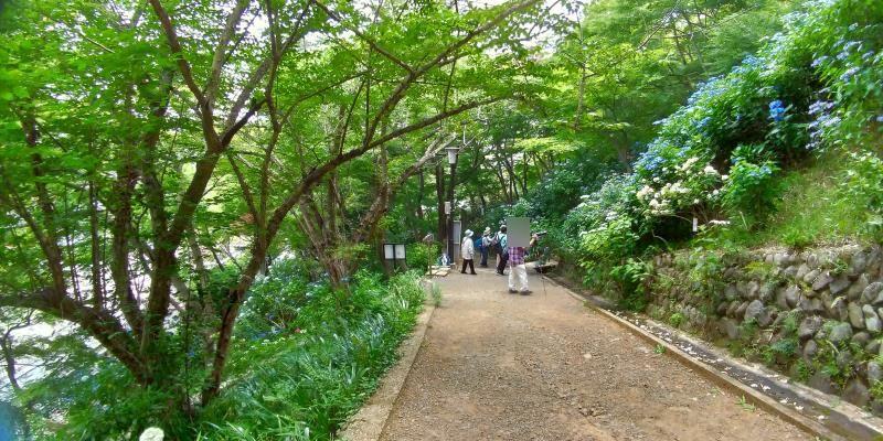 新緑とアジサイに囲まれた下り道