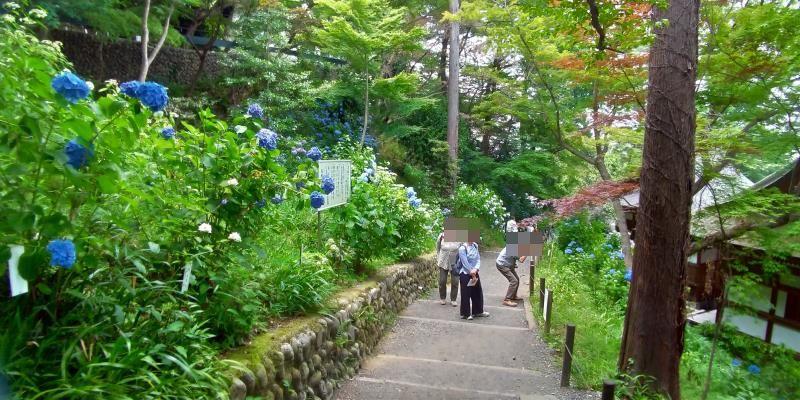 下に続くなだらかな階段、左手には青いアジサイ、右手にはお堂