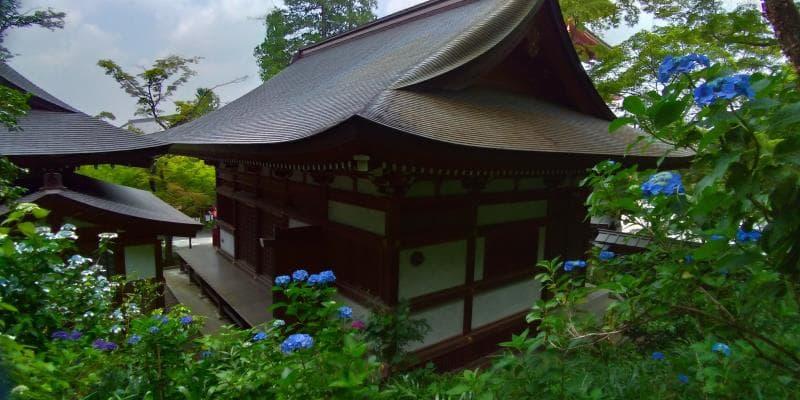 お堂の周りにぽつりぽつりと咲く青いアジサイ