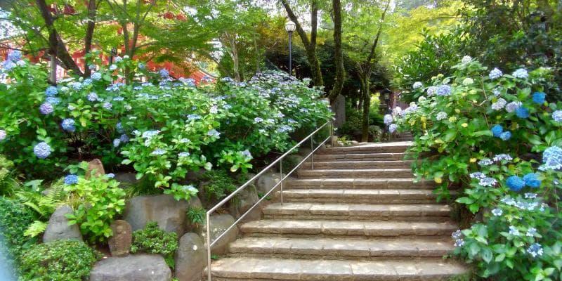 アジサイが両側に咲く階段