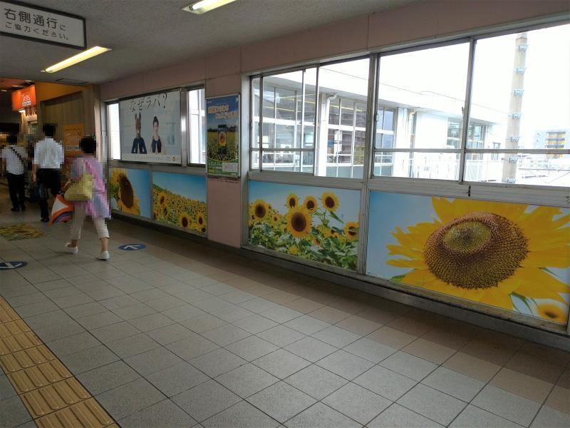ひまわりポスターで飾られた駅通路