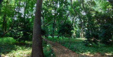 林試の森公園の園内
