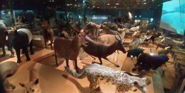 国立科学博物館の剥製