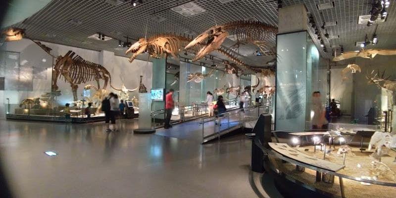 動物の骨格標本が天井にある