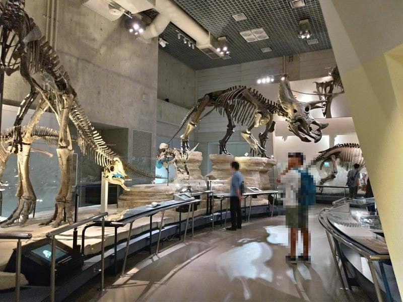 恐竜の骨格標本が並ぶ通路