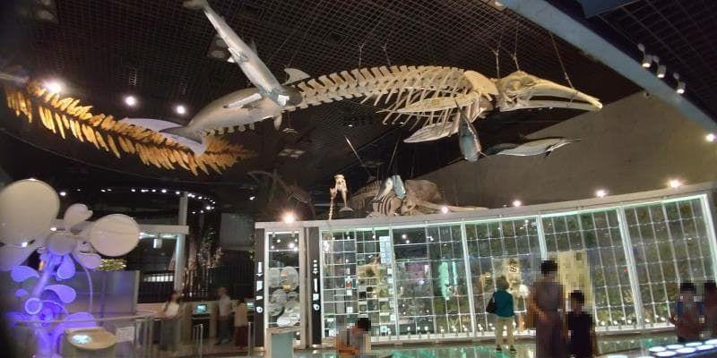 天井に吊るされたクジラとおぼしき骨格標本