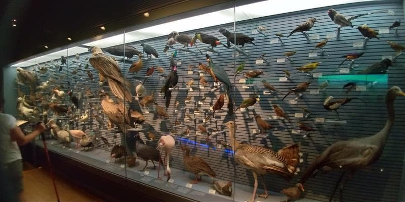 大量の鳥たち