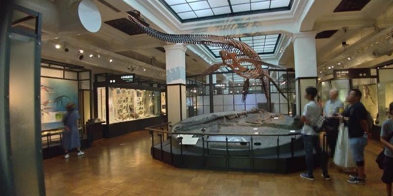 首の長い恐竜の骨格標本