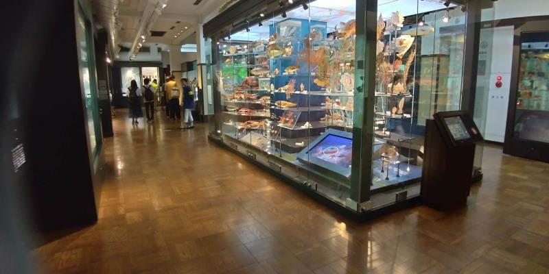 海の生き物の展示
