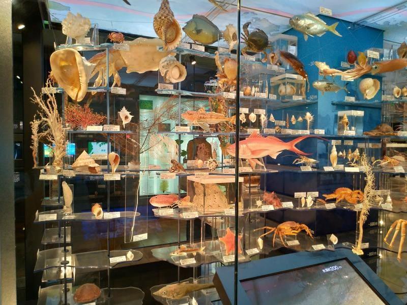多種多様な海の生き物