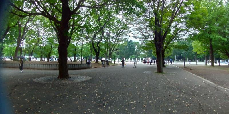 木々がならぶ公園