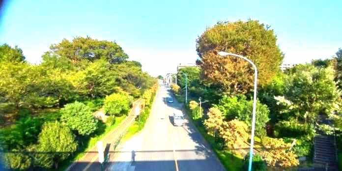 公園の陸橋からの眺め