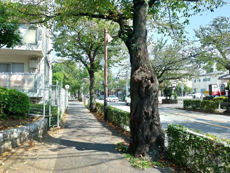 中央通りの並木
